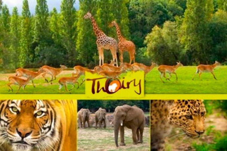 Сафари-парк в Туари