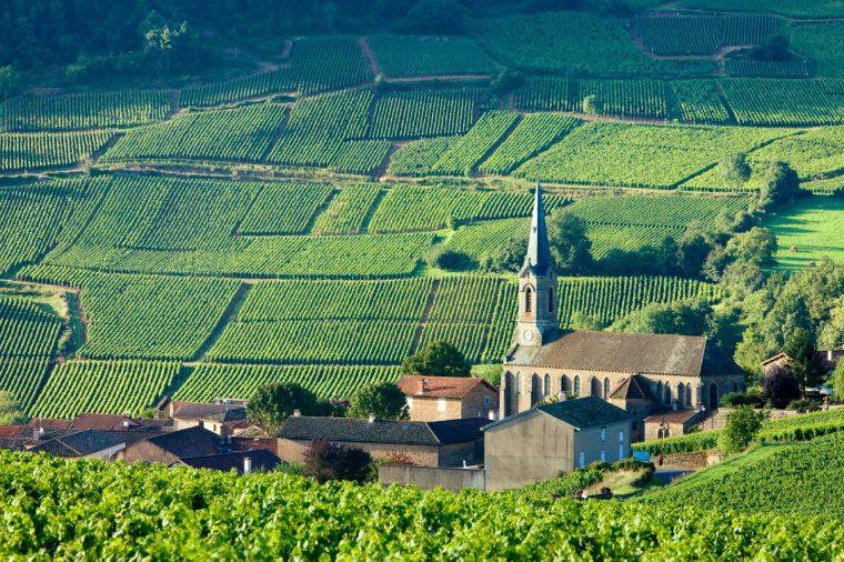 Традиция виноделия в Бургундии